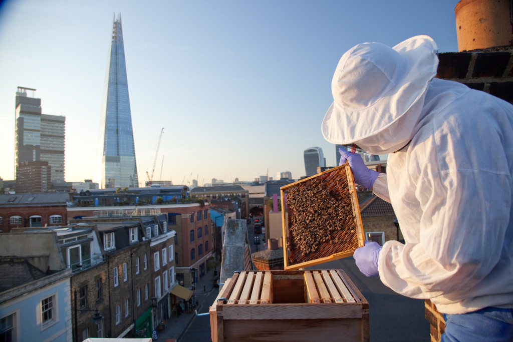 Bee good, put the forage before the honey